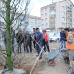 03.03.2016 Prestij Yol 2. Etap Orta Refüj Ağaç Dikimi (4) (1)