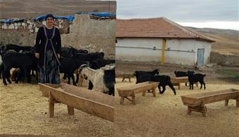 Genç Çiftçi Projesinde Keçi Dağıtıldı