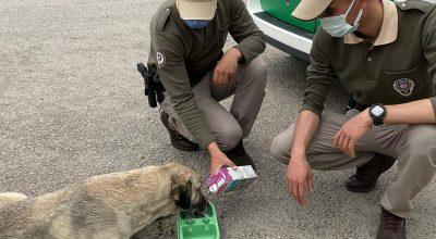 Polis Ekipleri Sokak Hayvanlarına Mama, Süt Ve Su Bıraktı