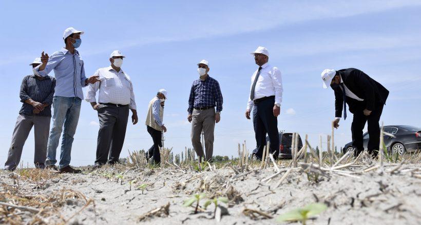 KOP İdaresinin destek verdiği Şeritvari Sürüm Tekniği, çiftçilerin yüzünü güldürdü