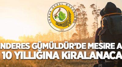 Menderes Gümüldür'de 10,6 hektar C tipi mesire alanı 10 yıllığına kiraya verilecektir