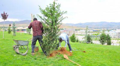KAEÜ Ağaçlandırma Çalışmaları