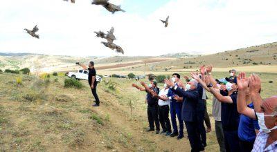 425 kınalı keklik doğaya bırakıldı
