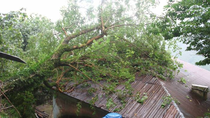 Kestiği Kavak Ağacının Altında Kalan Kişi Hayatını Kaybetti