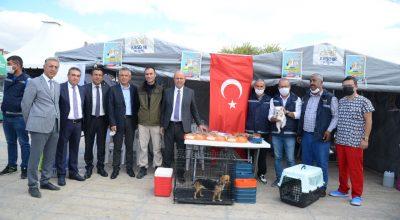 Kırşehir Belediyesi, Dünya Hayvanları Koruma Gününde Farkın dalık Yarattı