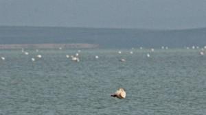 Seyfe Gölü kelebeklere de ev sahipliği yapıyor